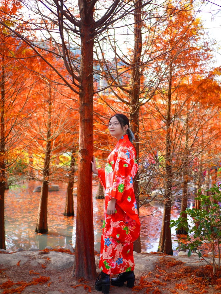 日本風情 | 紅葉與大紅和服 | 網美景點 | 水中紅葉落羽松 | 泰安 | 苗栗 | 巡日旅行攝