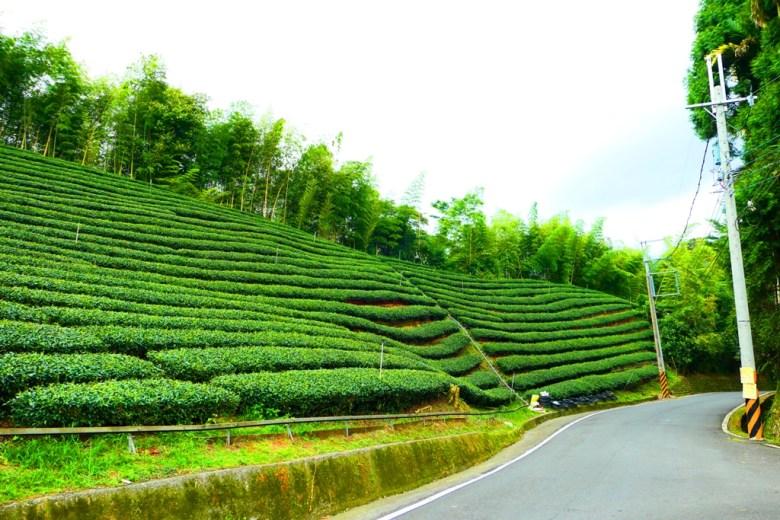清新茶園 | 鹿谷茶鄉 | 山上的清新空氣 | 綠意盎然 | 鹿谷 | Lugu | 南投 | Nantou | 和風巡禮 | 巡日旅行攝