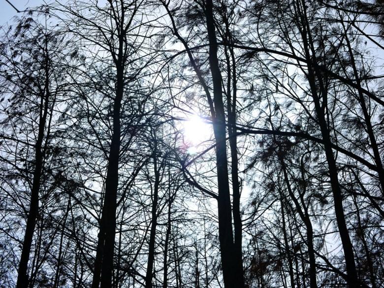 侘寂樹海感 | Dadu Taxodium distichum | 一抹和風 | Dadu | Taichung | Wafu Taiwan | RoundtripJp