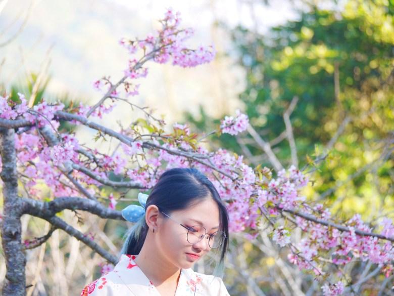 河津櫻 | 櫻花與和服少女 | 日本風 | Guoxing | Nantou | 和風臺灣 | RoundtripJp