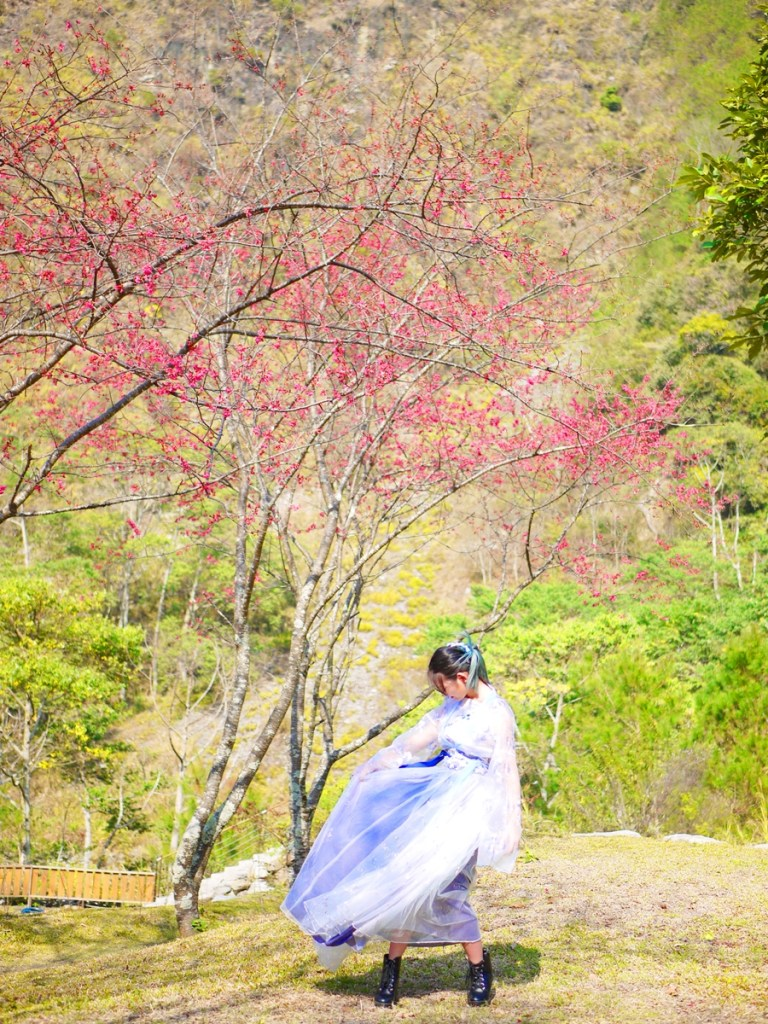 美艷山櫻花 | 飄逸的漢服 | 感受森林的氣息 | 網美景點 | 八仙山國家森林遊樂區 | 和平 | 台中 | RoundtripJp