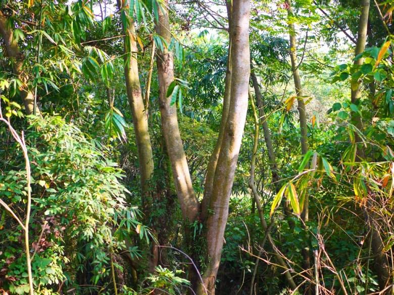 綠色森呼吸 | 梅山公園景緻 | メイシャンこうえん | Meishan Park | Wafu Taiwan | RoundtripJp