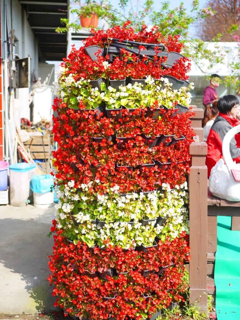 美麗的花柱 | 芬園花卉生產休憩園區主題櫻花 | 烏日 | 台中 | Wuri | Taichung | RoundtripJp