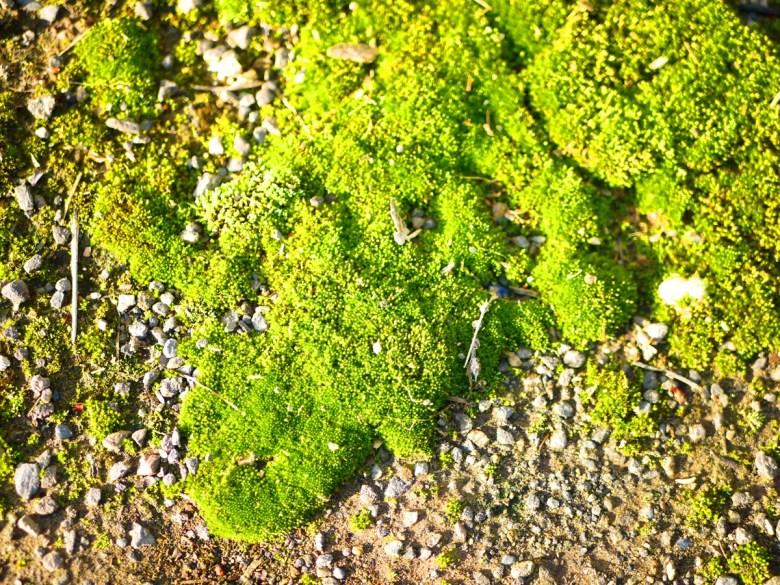 一旁的綠色青苔 | 舒服的青綠色 | 大自然的美麗 | Xinshe | Taichung | 新社 | 台中 | RoundtripJp