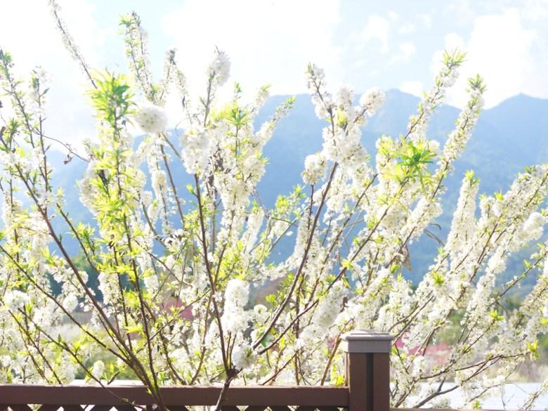 直挺挺的李花 | 白皙美麗 | シンイー | Xinyi | Nantou | RoundtripJp