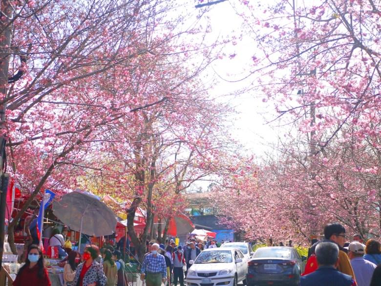 綿延不絕的櫻花大道 | Cherry Blossom Avenue | 絡繹不絕的賞花民眾 | 農夫市集與洗手間處 | 8號~10號停車場附近 | 巡日旅行攝