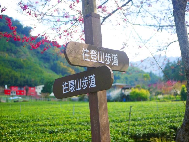 往登山步道 | 往環山步道 | 清新自然的大片茶園 | 草坪頭玉山觀光茶園 | 信義 | 南投 | RoundtripJp