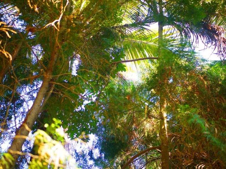 陽光椰林 | 原始自然 | 東南亞風 | 漳和撼龍步道櫻花秘境 | 漳和 | 南投 | 和風臺灣 | 巡日旅行攝