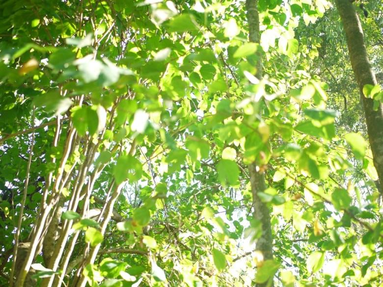 一抹淺綠 | 清新自然 | 綠色步道 | Zhang Heli Dragon Trail | 漳和 | 南投 | RoundtripJp
