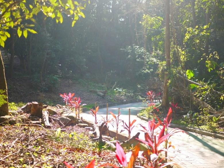 秘境森林步道 | 原始自然 | 空氣清新 | 人煙稀少 | 漳和撼龍步道櫻花秘境 | Zhang Heli | Dragon Trail | 巡日旅行攝