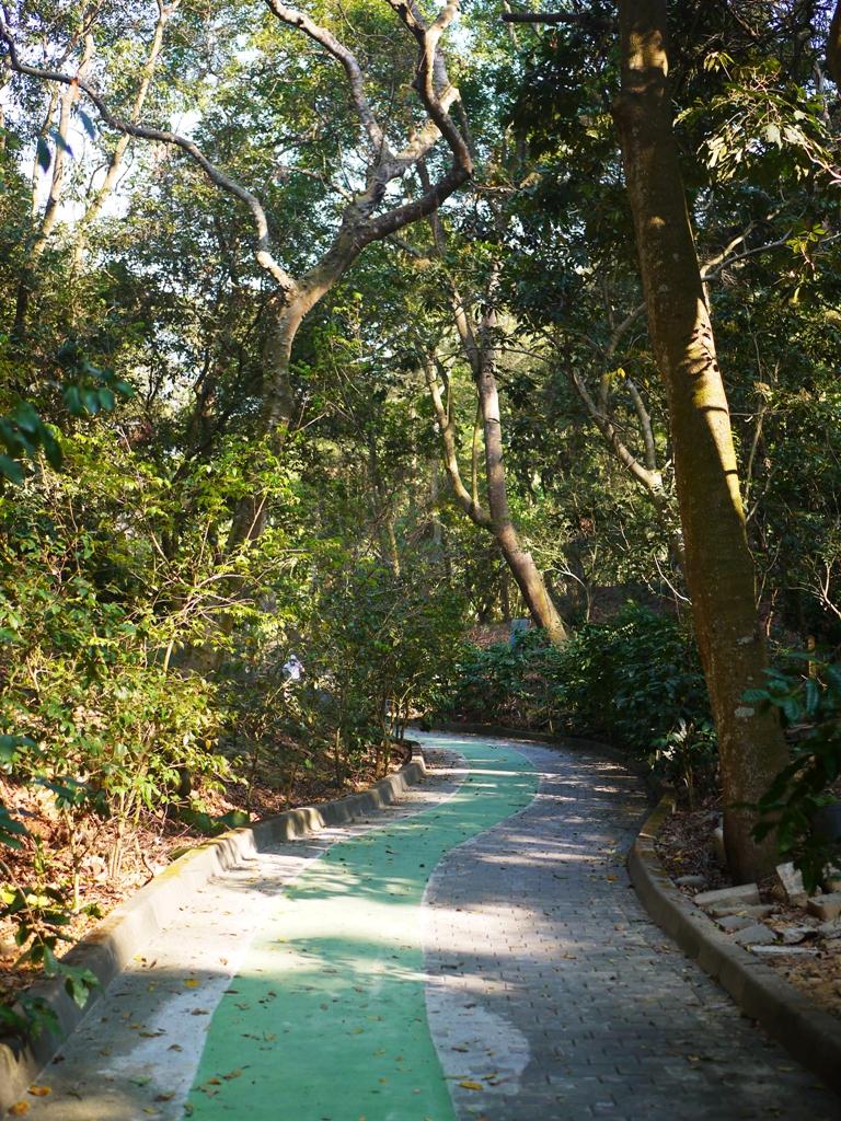 平坦舒適的賞櫻步道 | 綠色防滑步道 | 漳和撼龍步道櫻花秘境 | Zhang Heli | Dragon Trail | RoundtripJp