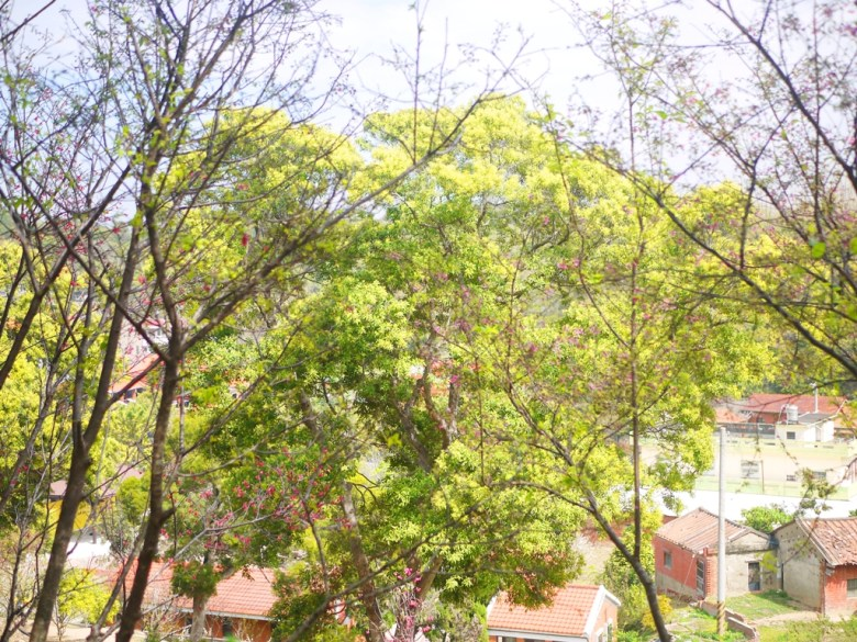 茂盛的綠樹 | 紅磚古厝 | 臺灣風景 | Hushanyan | Huatan | Changhua | RoundtripJp