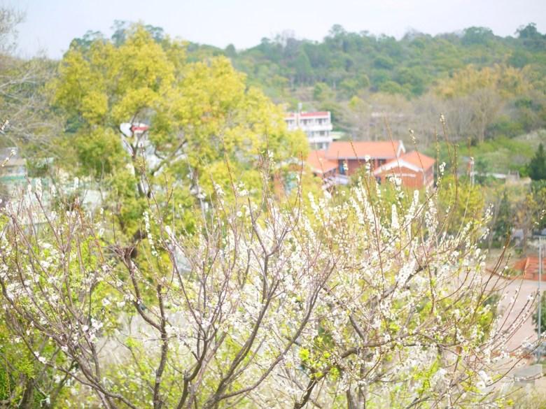 李花與綠樹 | 古厝與矮房 | 綿延的青山 | 一覽無遺 | 虎山巖 | 花壇 | 彰化 | 巡日旅行攝