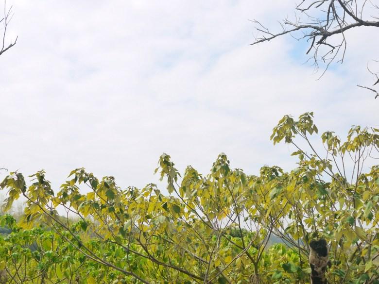 展望平台後方的遠山與綠樹之美 | 一覽無遺 | 虎山巖 | 花壇 | 彰化 | 巡日旅行攝