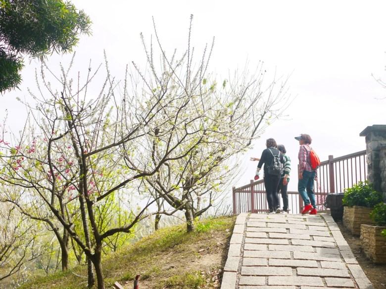 賞花的臺灣旅人 | 一登高處鳥瞰李花銀白雪花海 | 虎山巖 | 花壇 | 彰化 | 巡日旅行攝