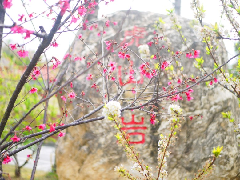 虎山巖正門前石碑 | 山櫻花與李花 | Hushanyan | Huatan | Changhua | RoundtripJp