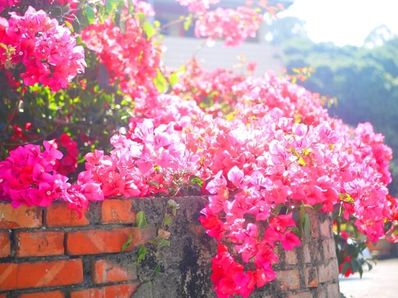 鮮豔的路旁紅花 | 燦爛綻放 | 湖水路 | いんりん | ジャンホワ | 巡日旅行攝