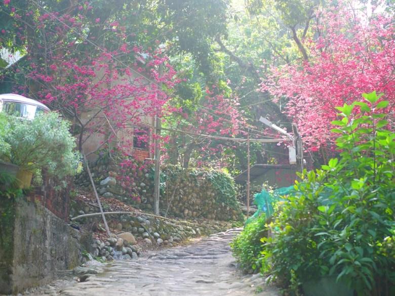 古樸的臺灣民宅與鄉下巷弄 | 湖水里八重櫻秘境 | いんりん | ジャンホワ | RoundtripJp