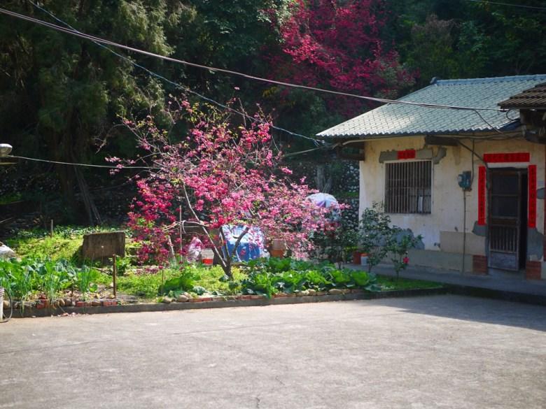 湖水里八重櫻秘境的最頂端 | 古樸的臺灣民宅 | 三合院 | 湖水 | 員林 | 彰化 | 巡日旅行攝