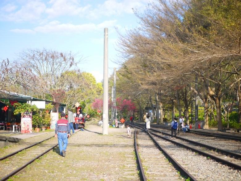 鐵道與八重櫻之美 | 賞櫻賞鐵道 | 人潮稀少 | Taian | Miaoli | 巡日旅行攝