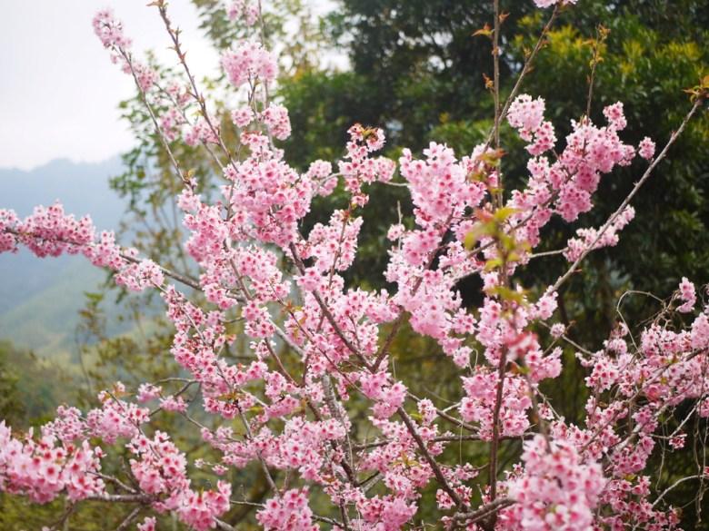 粉紅櫻花 | 紅粉佳人 | 夢幻粉嫩 | 少女系顏色 | グーコン | Gukeng | Wafu Taiwan | RoundtripJp
