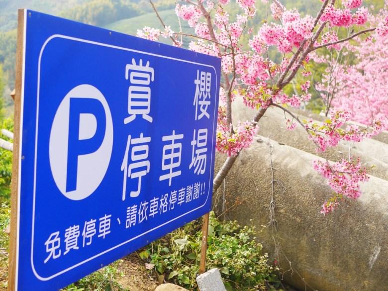 賞櫻停車場   免費停車   賞櫻期間一位難求   石壁風景區   Gukeng   Yunlin   巡日旅行攝