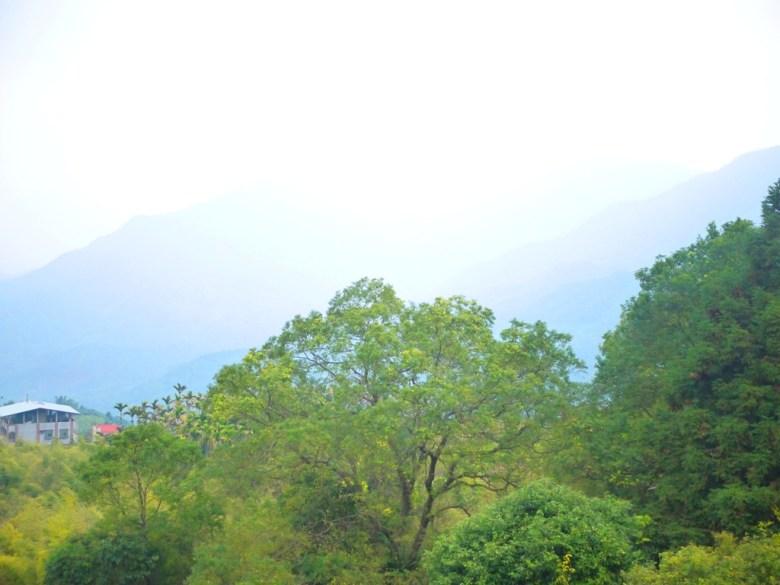 從鳳凰教育中心觀景平台遠眺的群山之美 | 雲霧繚繞 | 絕美山景 | 鹿谷 | 南投 | 巡日旅行攝