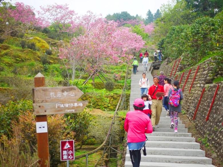 賞櫻石階 | 靠近住宿停車場的石階 | 南投鳳凰自然教育園區 | ルーグー | Lugu | Nantou | RoundtripJp