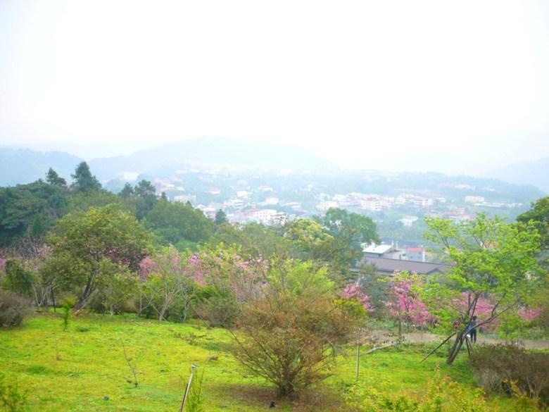 從觀景迴廊鳥瞰的畫面 | 南投鳳凰自然教育園區 | 鹿谷 | 南投 | 巡日旅行攝