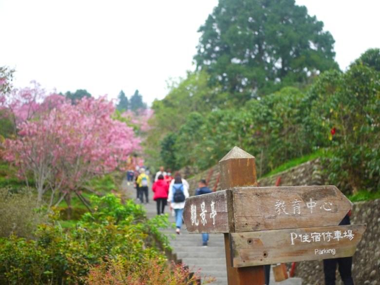 靠近住宿停車場的櫻花步道 | 南投鳳凰自然教育園區 | 鹿谷 | 南投 | 巡日旅行攝