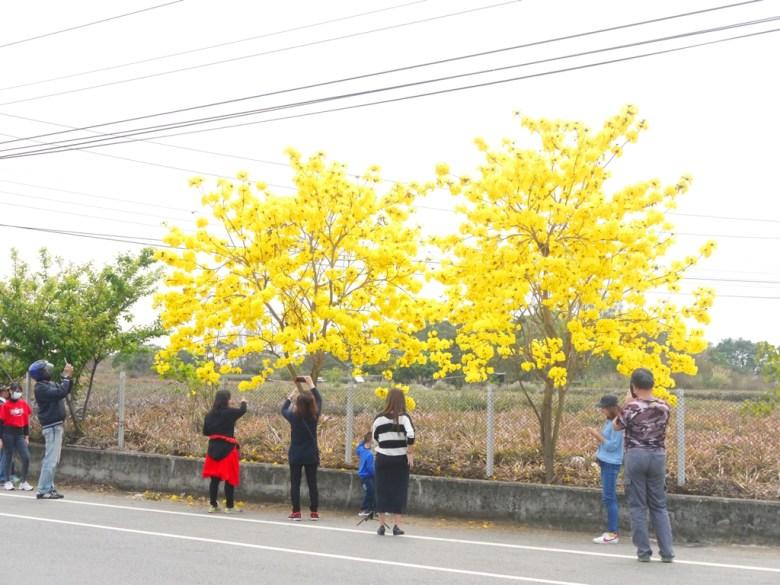 滿滿的臺灣旅人 | 駐足拍照 | 芬園鄉139縣道 | Fenyuan | Changhua | 巡日旅行攝