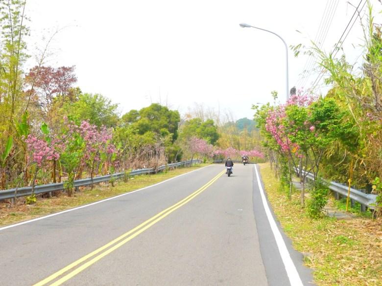 富士櫻櫻花大道 | 重機 | 芬園鄉139縣道 | ふんえん | ジャンホワ | RoundtripJp