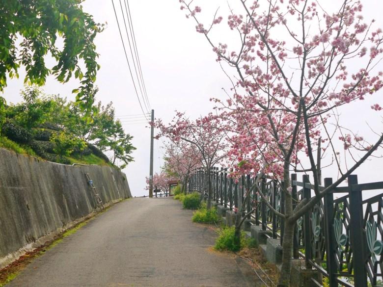 往八卦回音亭方向 | 沿途盡是美麗的吉野櫻 | 霧氣繚繞 | 軟鞍八卦茶園 | ジューシャン | Zhushan | Nantou | RoundtripJp