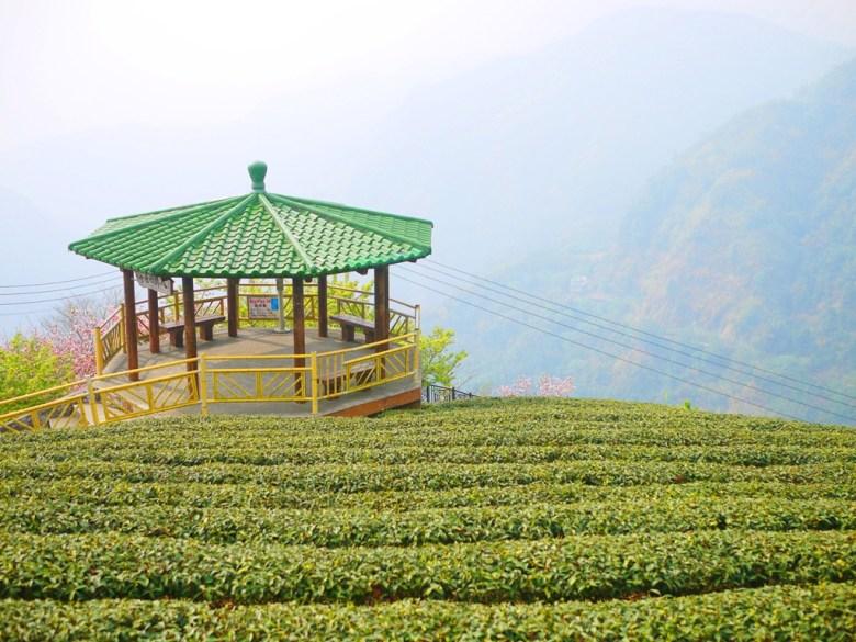 八卦回音亭 | 茶園中的愜意 | 遠眺群山之美 | 高山雲霧 | 茶園清新 | Zhushan | Nantou | RoundtripJp