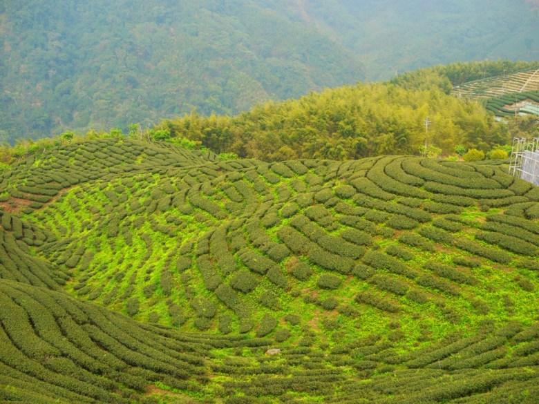 臺灣著名CM茶園拍攝點 | 南投八卦茶園 | 八卦般的茶園排列 | 斗笠茶園 | Zhushan | Nantou | RoundtripJp