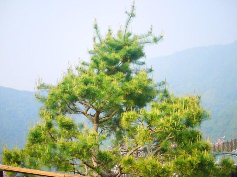 松樹 | 茂盛的青青綠樹 | 雲霧繚繞的高山 | Zhushan | Nantou | RoundtripJp