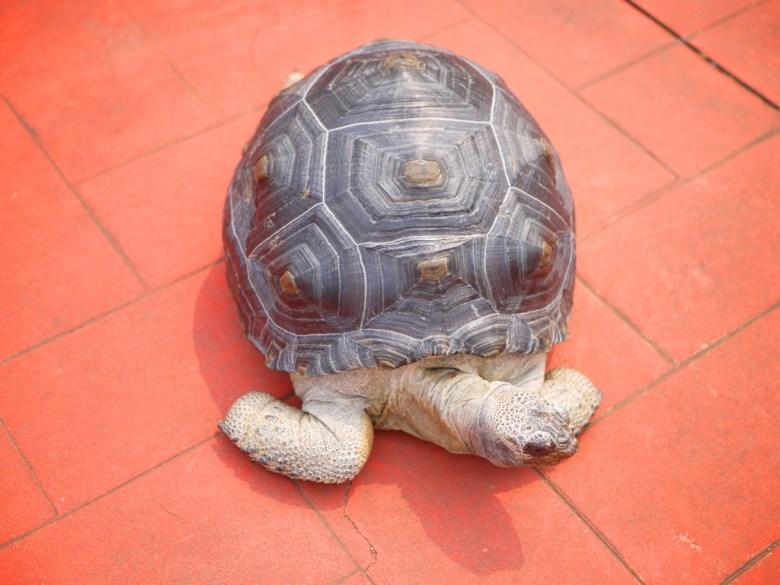 山腳國小的烏龜 | Shan-jiao Elementary School | ユエンリー | ミアオリー | 和風巡禮 | RoundtripJp