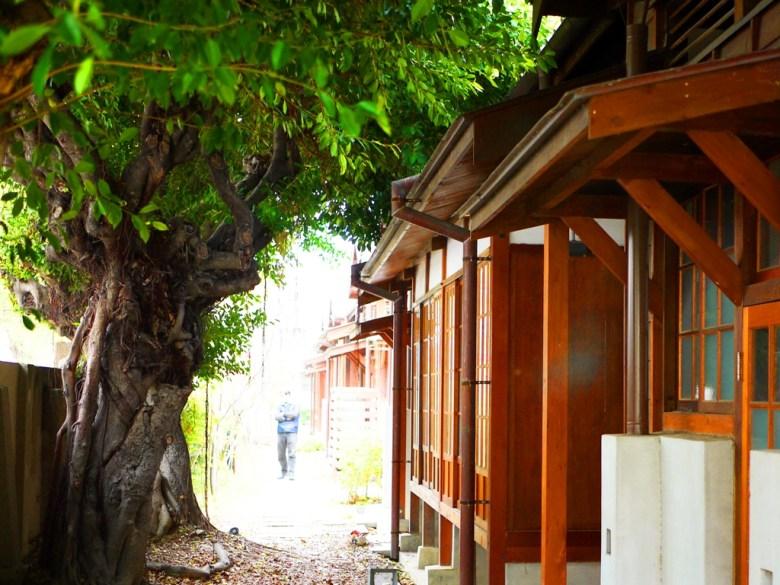 老樹 | 日式建築後方 | 小京都 | 日本味 | 清水公學校日式宿舍群 | 清水 | 台中 | チンシュイ | タイジョン | 巡日旅行攝
