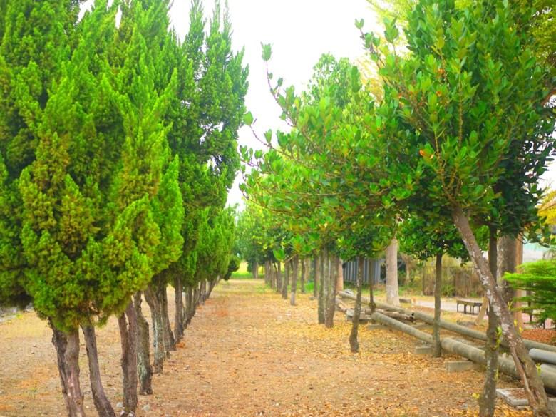 超級好拍的綠樹並木 | 落葉瑟瑟 | 鄉下田園 | 純樸自然 |ドウリウ | ユンリン | Douliu | Yunlin | 巡日旅行攝