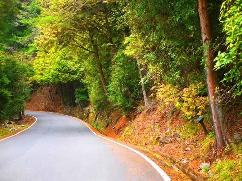 沿途豐富的林相 | 大自然綠色森呼吸 | 大雪山國家森林遊樂區 | 和平 | 台中 | 巡日旅行攝