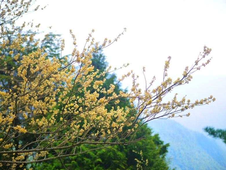 豐富的自然生態 | 雲霧繚繞 | 高山壯麗 | 大雪山國家森林遊樂區 | 和平 | 台中 | RoundtripJp