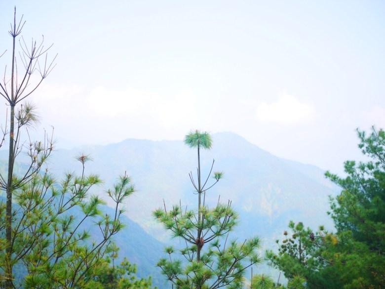 遠山之美 | 高山清淨 | 自然森呼吸 | 大雪山國家森林遊樂區 | 和平 | 台中 | RoundtripJp