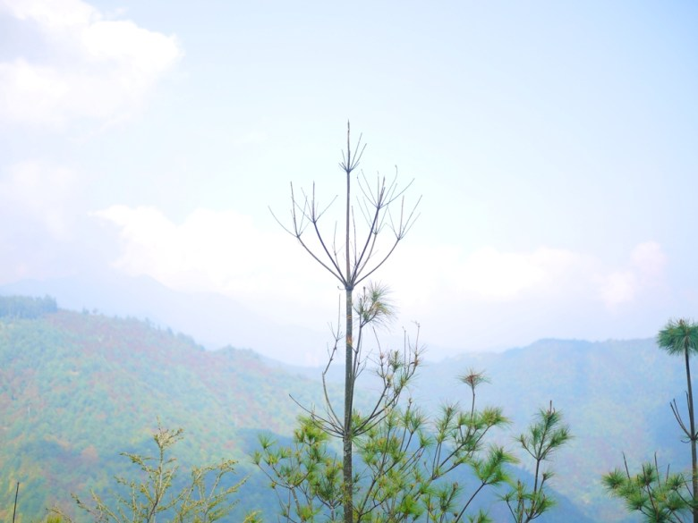 群山之美 | 雲霧繚繞 | 大雪山國家森林遊樂區 | 和平 | 台中 | 巡日旅行攝
