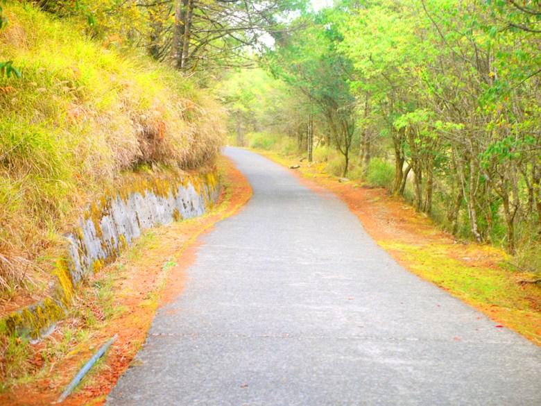僅能步行 | 往天池方向 | 自然步道 | 大雪山國家森林遊樂區 | 和平 | 台中 | 巡日旅行攝