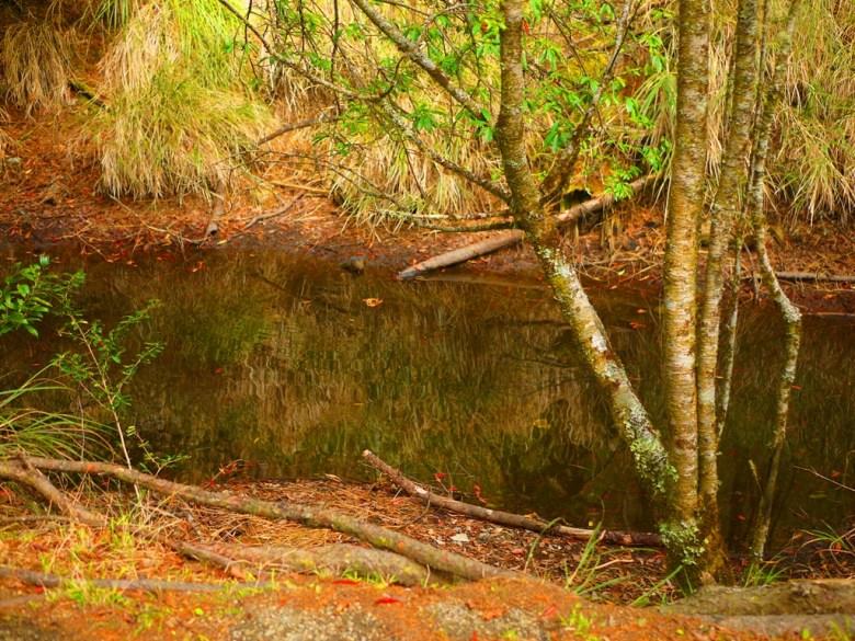 往天池方向沿途的小水池 | 野鳥 | 自然生態 | 大雪山國家森林遊樂區 | 和平 | 台中 | RoundtripJp