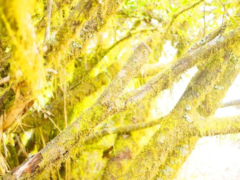 滿是青苔的樹木 | 自然的氛圍 | 大自然 | 海拔2,600公尺之上 | 大雪山 | 大雪山國家森林遊樂區 | 和平 | 台中 | RoundtripJp