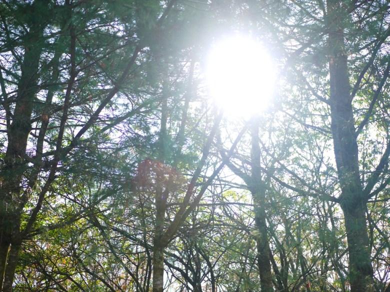陽光燦爛 | 森林中的一抹光線 | 大雪山國家森林遊樂區 | 和平 | 台中 | RoundtripJp