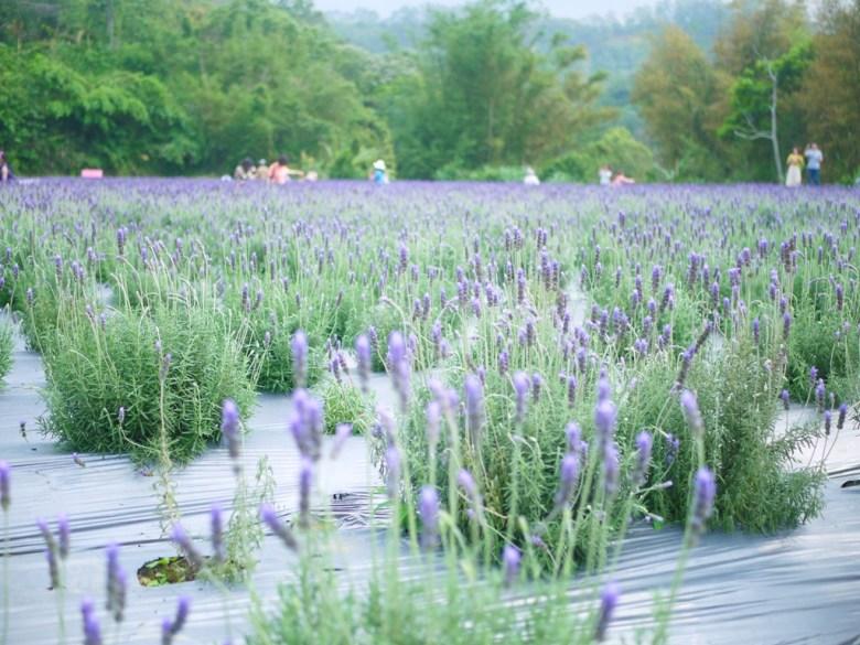 被大自然環繞的薰衣草花田 | 紫色愛戀 | 異國風情 | 日本味 | 臺灣旅人 | 頭屋 | 苗栗 | 巡日旅行攝