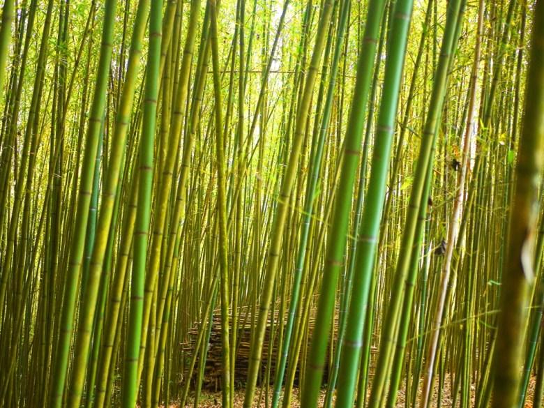 層層堆疊 | 滿山遍野的竹林 | 高山 | 空氣清新 | 烏嘎彥竹林 | 泰安 | 苗栗 | RoundtripJp