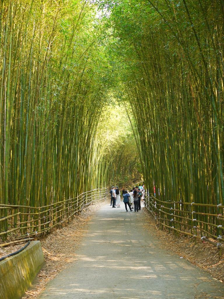 最有日本京都嵐山的竹林小徑氣氛的一小段 | 烏嘎彥竹林 | 泰安 | 苗栗 | 巡日旅行攝